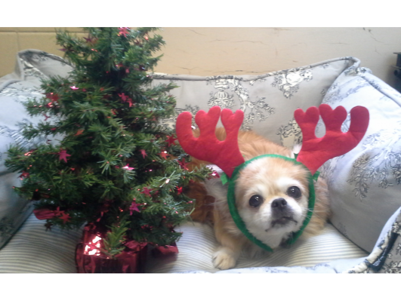 St Hubert S Rescue Dog Needs A Christmas Miracle Madison Nj Patch
