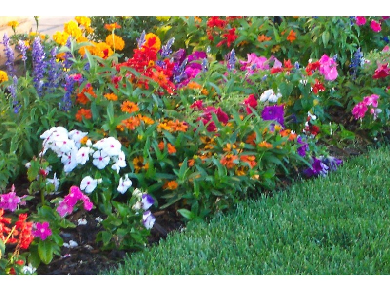 Beautiful Plants For Shade 6 Shade Friendly Plants That