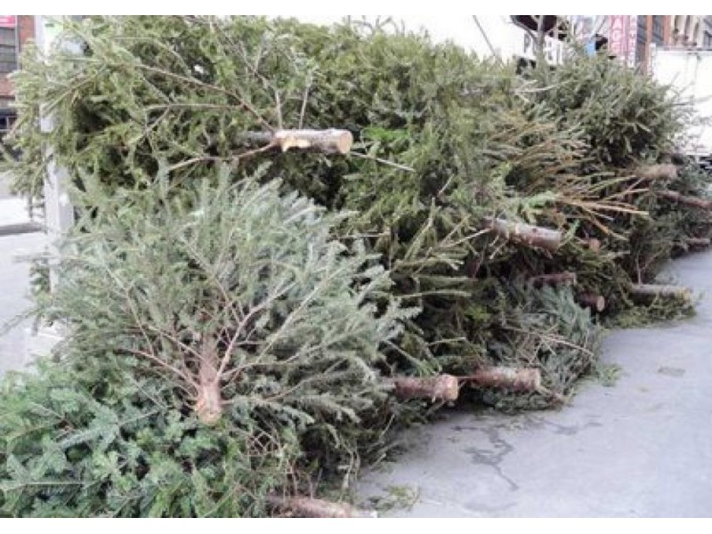 Bring Christmas Trees To Transfer Station