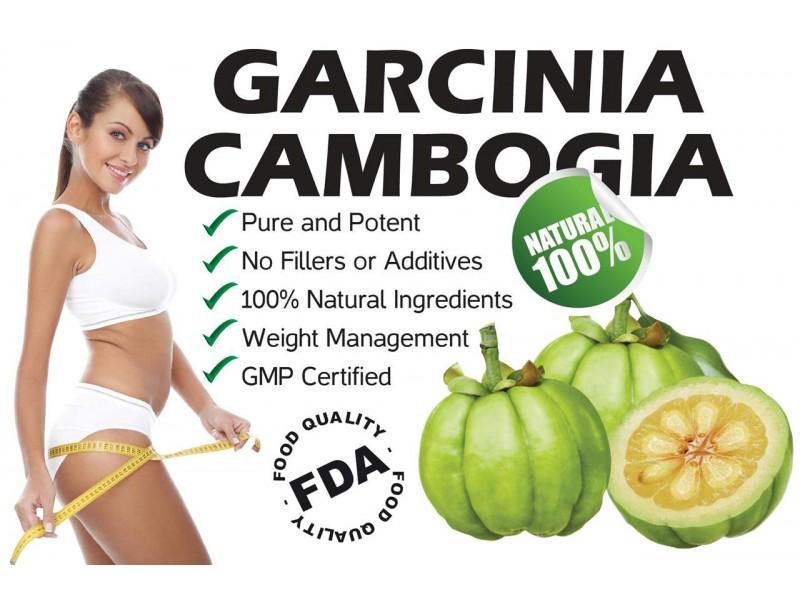dr oz and garcinia cambogia