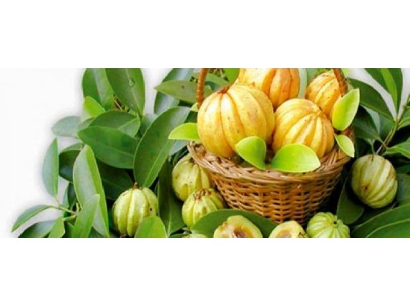 Garcinia Cambogia Extract Dr Oz 2015 Trial Bottle - Where to buy Dr Oz