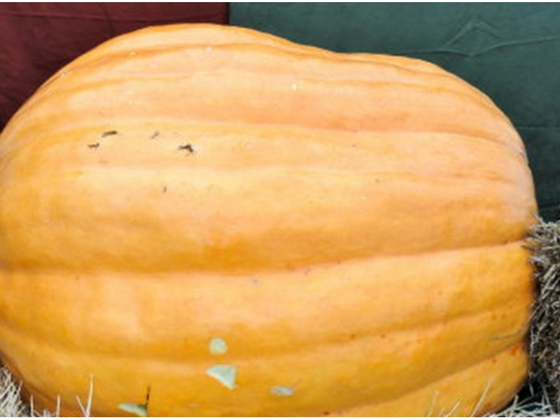 Pumpkin Patches in New Jersey - Funtober