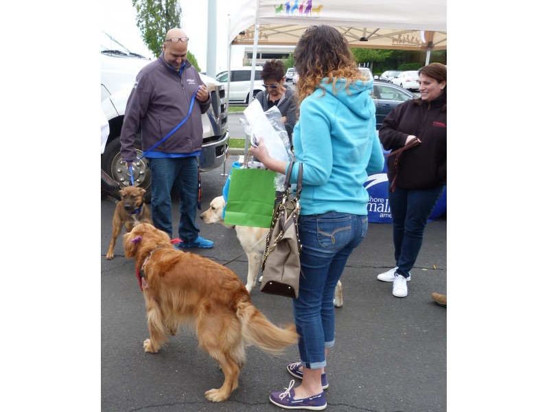 Petfest Adoption Day A Success Patch