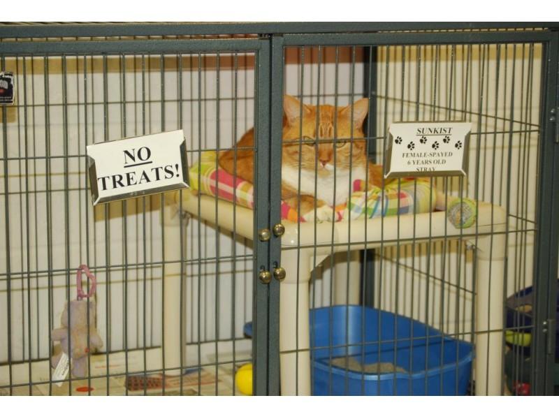 essex animal shelter