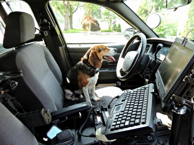 police rescue lost dog in lansdale who then enjoys air. Black Bedroom Furniture Sets. Home Design Ideas