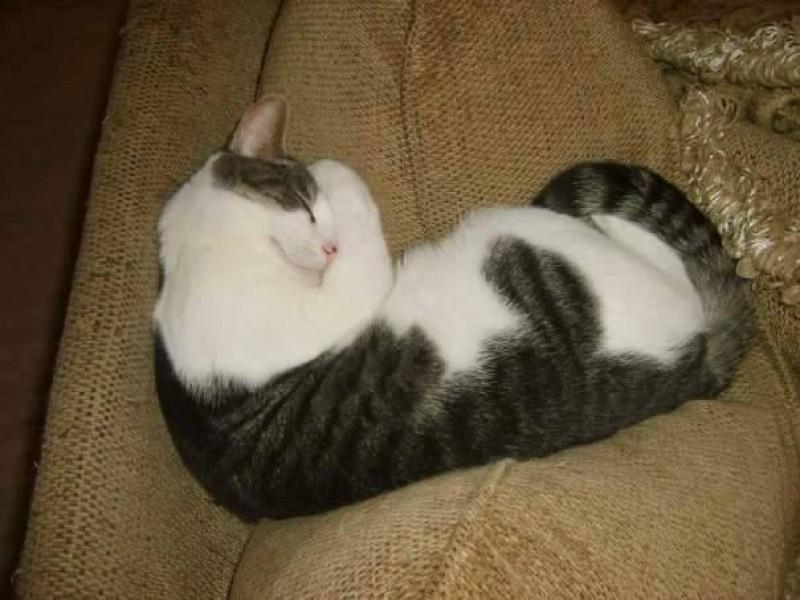 warrior cat deaths