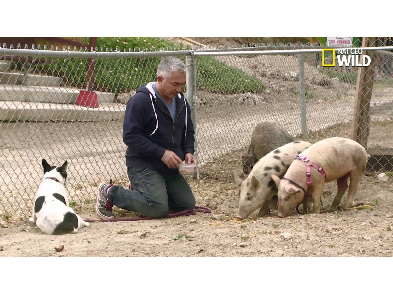 Name Of Dog Training Tv Show With Cesar Millan