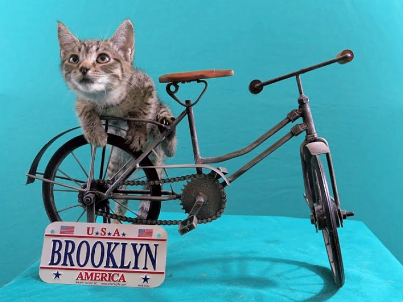 Cat Cafe In Brooklyn Heights