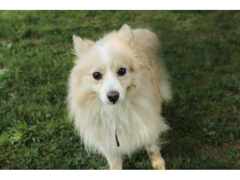 Adopt A Dog Delaware County Pa
