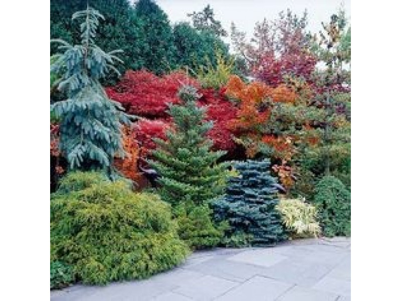 Free fall landscape design tree removal quotes patch for Landscape design quotes