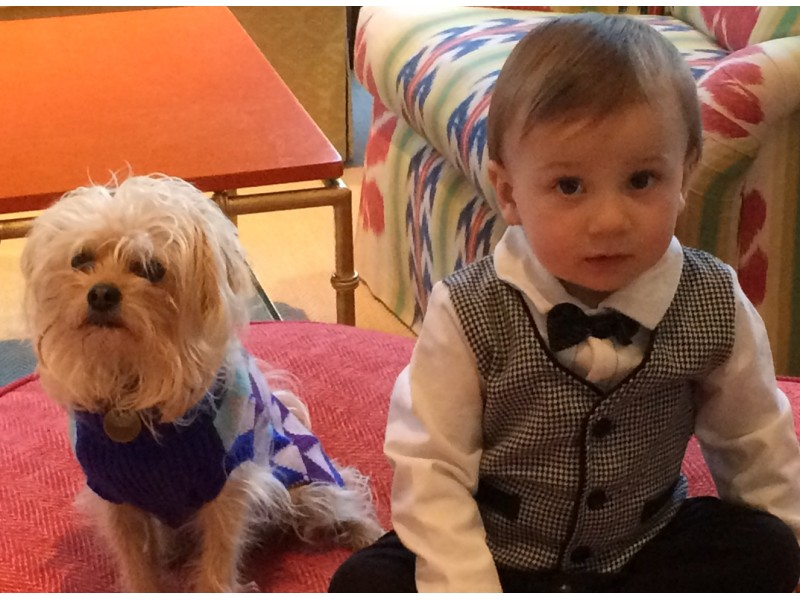 Woman Missing With  Yorkie Dogs