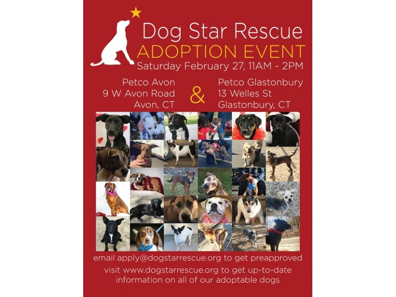 Dog Adoption Events This Weekend In Ct