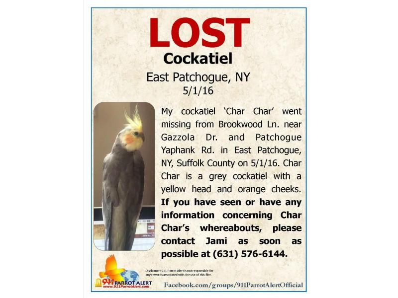 Lost Cockatiel Long Island