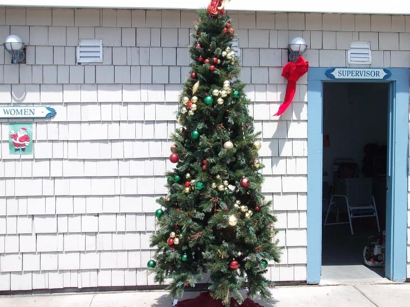 Christmas Tree Springfield Nj