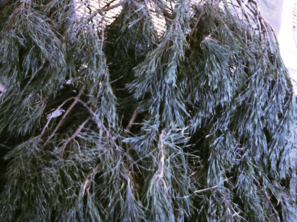 Where To Recycle Your Christmas Tree In San Diego County