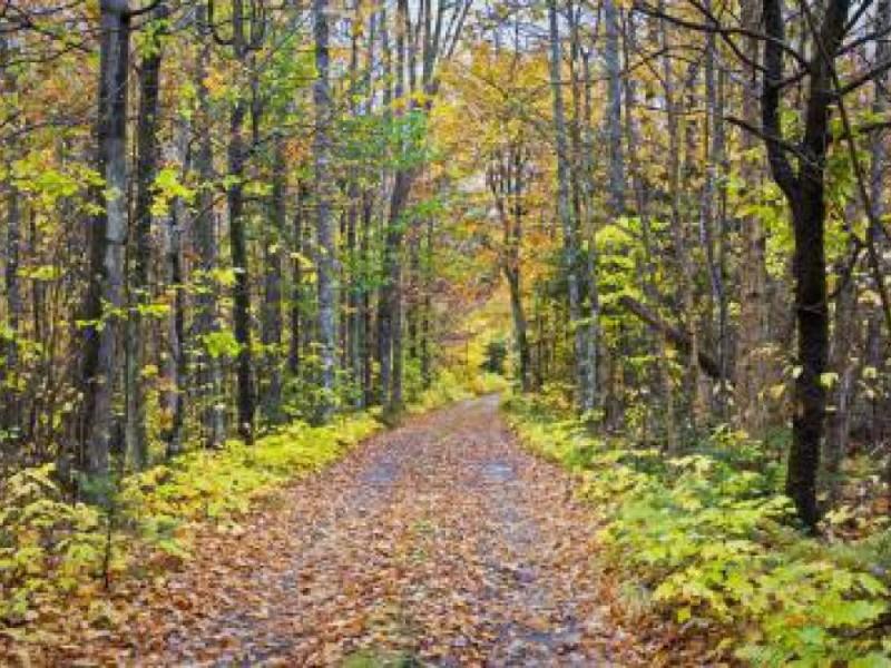 Arbor Day Foundation Names City of Sugar Hill Tree City USA