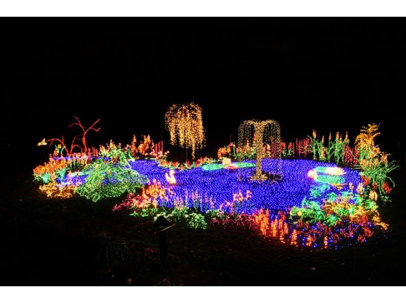 Garden d 39 lights at bellevue botanical garden bellevue wa patch for Bellevue botanical garden lights