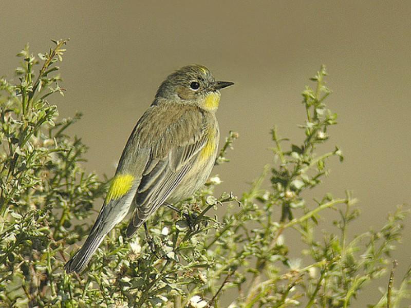 Blog Winter Birds In Northeast L A Highland Park Ca Patch