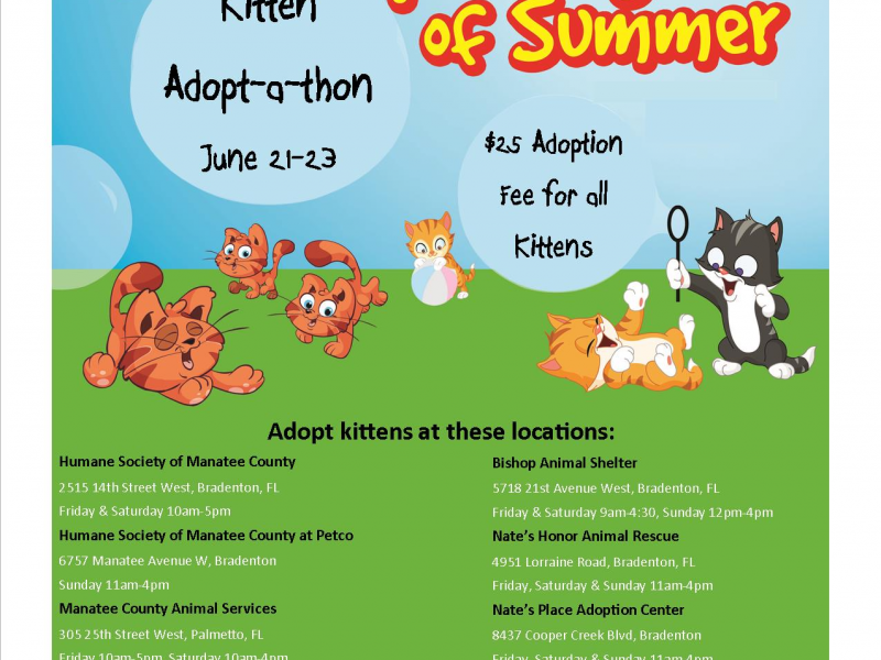 Animal Shelter Kittens Bradenton