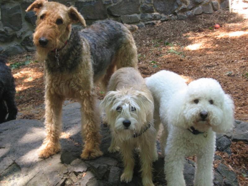 Dog Park Malden