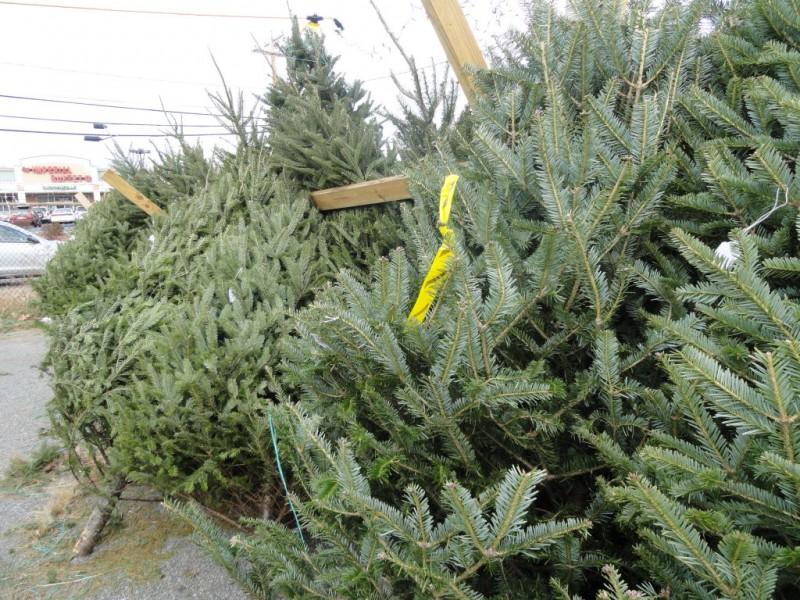 Christmas Tree Natick