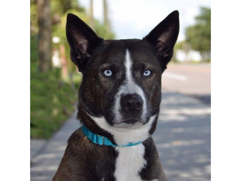 Adoptable Small Dogs In Florida