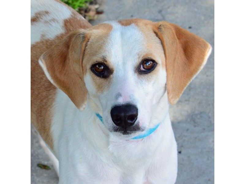 Adoptable Small Dogs In Largo Florida Pet Pal