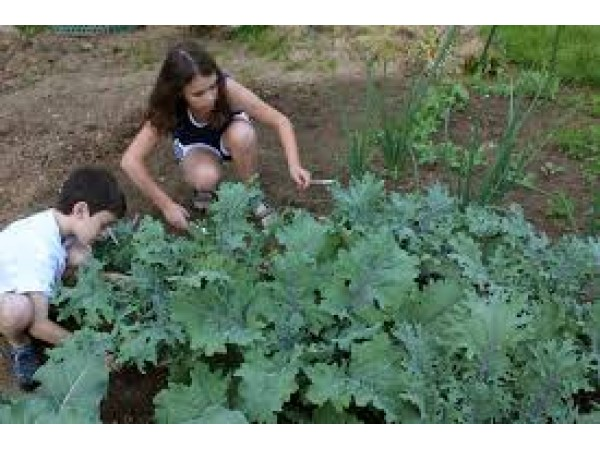 Grow A Garden Newark Nj Patch
