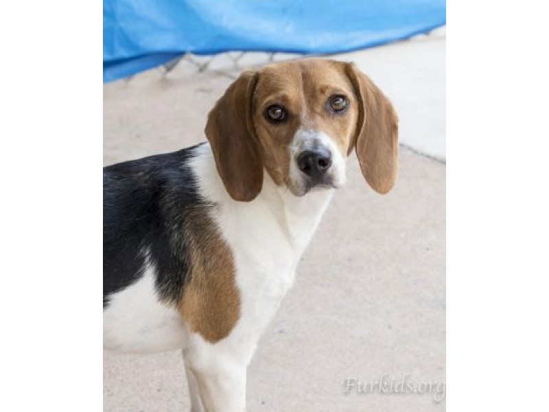 Dog Adoption Sandy Springs Ga
