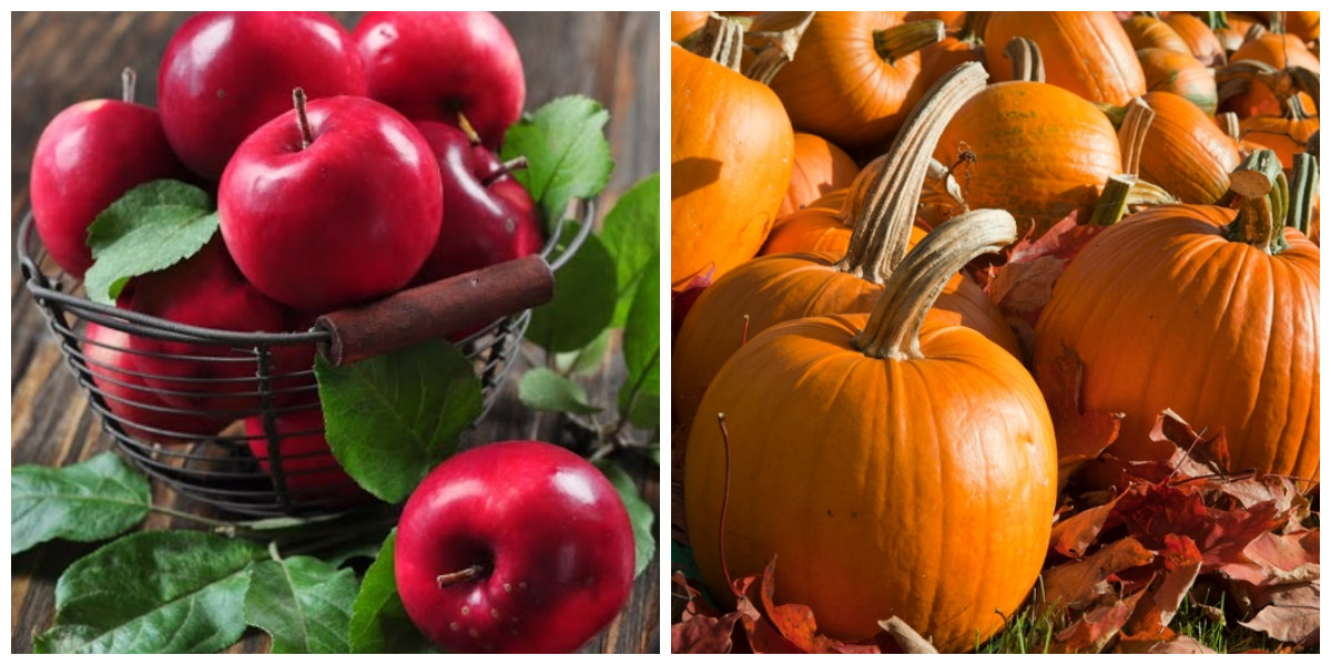 Pick-Your-Own Apple, Pumpkin Farms in the Jamaica Plain Area