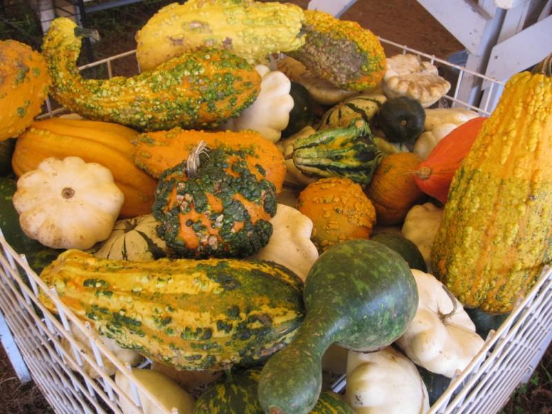 Pumpkin Patches Corn Mazes near Lawrenceville, GA 30043