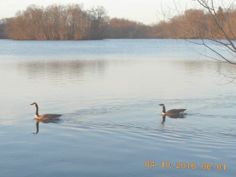 North Farms Reservoir 4 10 2016 Patch
