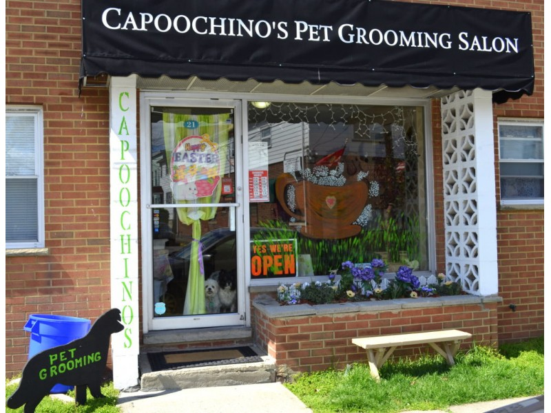 Dog Day Care Livingston Nj