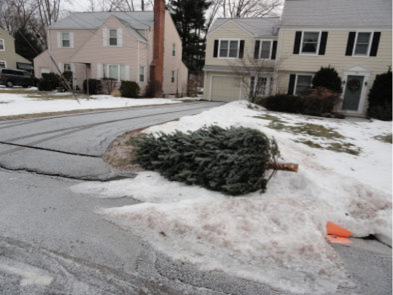 Christmas Tree Pick Up Dates Set In Montville