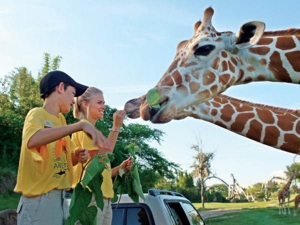 Image Result For Busch Gardens Day Camp