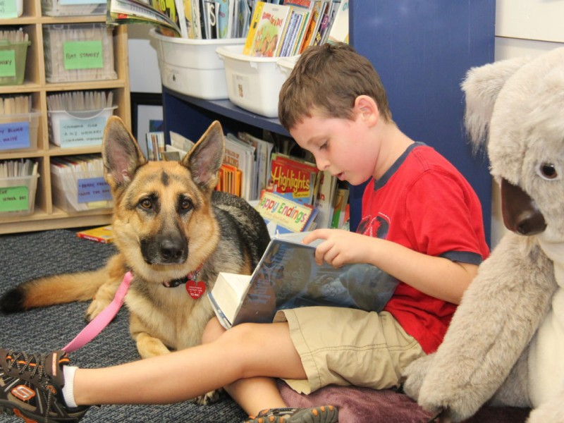 Best Dogs For Therapy Work