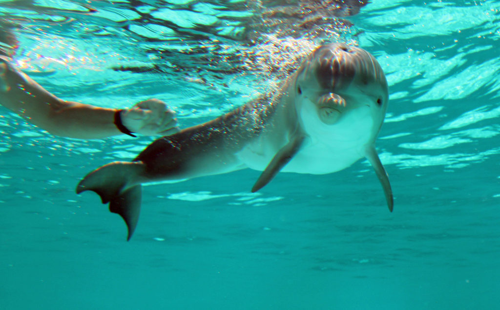 Latest Rescued Dolphin Offers 39 Hope 39 At Clearwater Marine