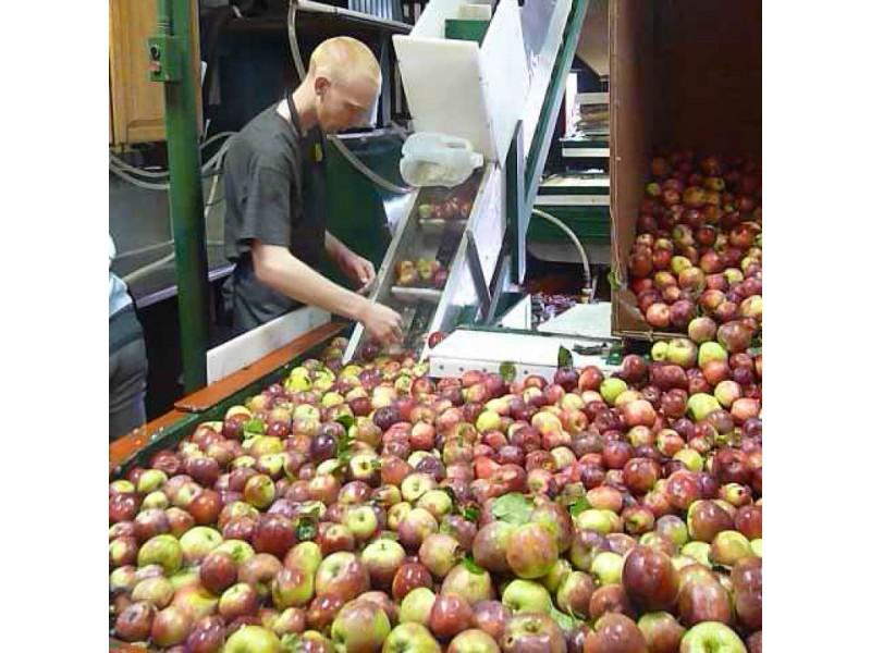 Apples Apples Everywhere Minea Farm Patch