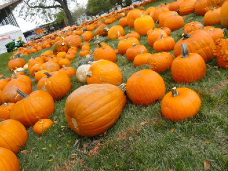 Pumpkin Patches, Corn Mazes In The Chicago Area