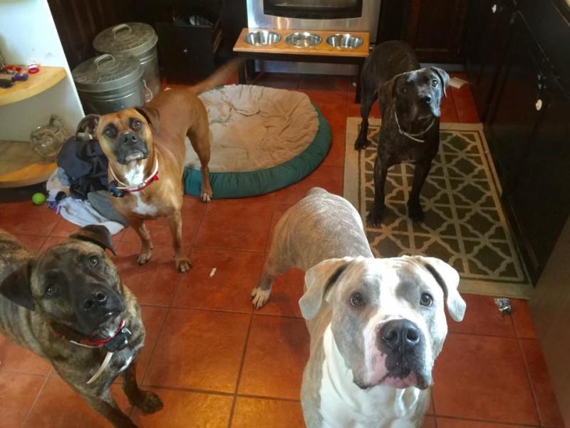 Family Dogs Save Child From Backyard Bear Patch