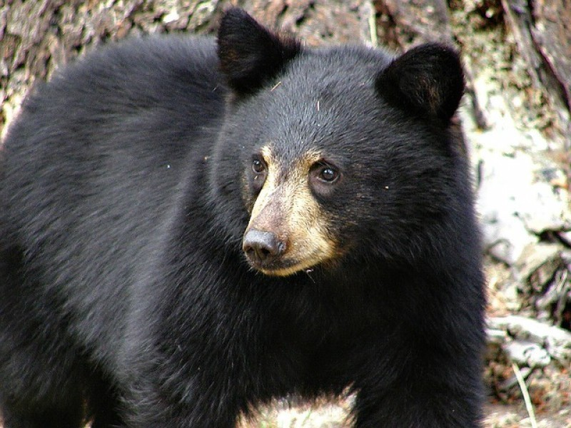 Bear attacks Boy Scout leader in northern New Jersey