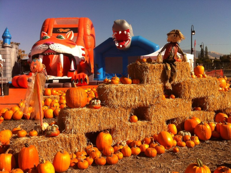 pumpkin patch photo ideas - Pumpkin Patches Sprout Up Across the East Bay Concord