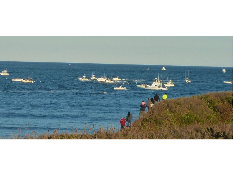 Fishing spectacle at montauk point patchogue ny patch for Montauk ny fishing