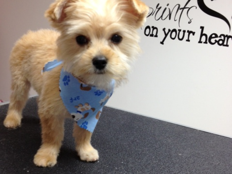 Dog Groomer For Small To Medium Sized Dogs Channahon Il