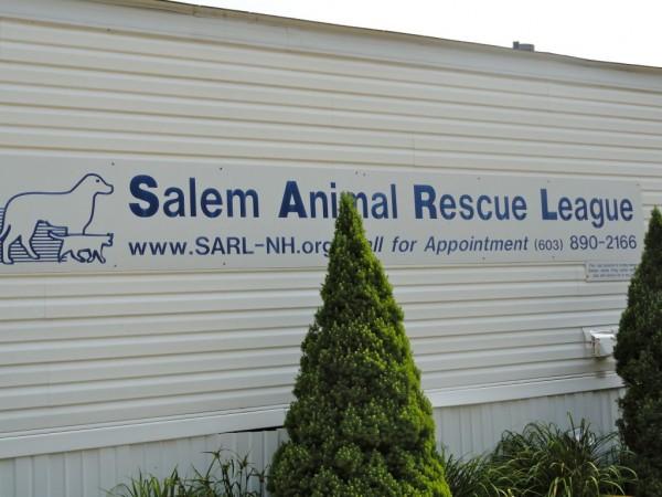 Rescue Dogs Concord Nh