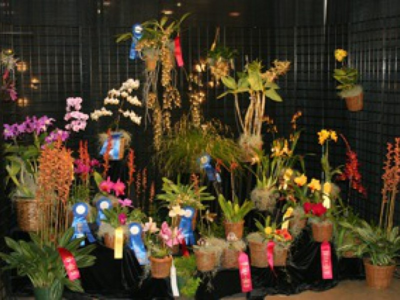 Photos orchids abound at the maryland home and garden Md home and garden show