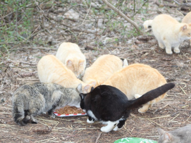 Feral Cats Dry Food