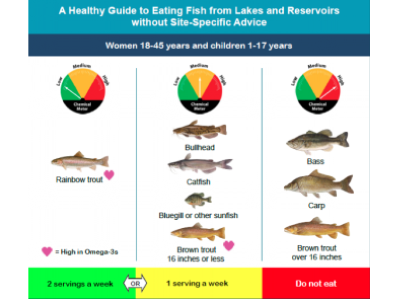 Women children told to avoid freshwater fish due to high for Fish with high levels of mercury