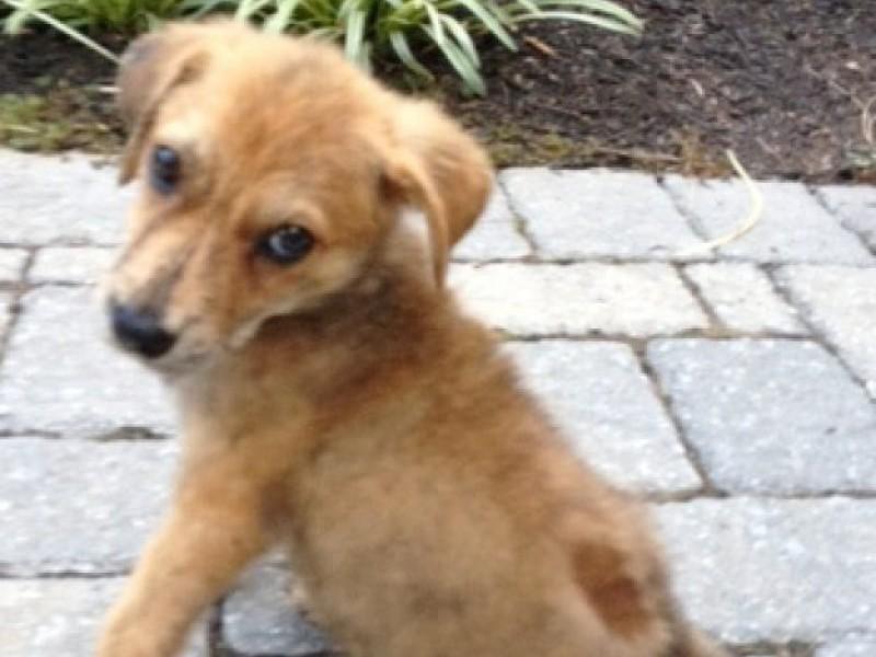 Petsmart Madison Dog Adoption