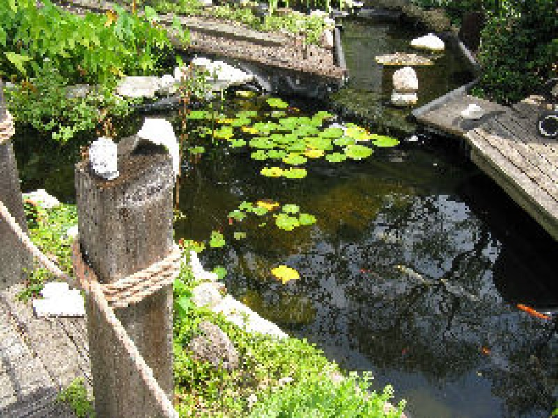 North suburban pond and garden walk niles morton grove for Garden pond reddit